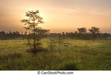 Dawn over Everglades Swamp