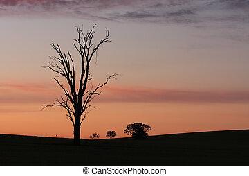 Dawn rural sillhouettes