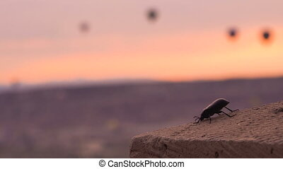 Dawn Shot. Black Beetle from Tribe Tenebrionidae is Moving its Antennae with Flying Balloons on Background.