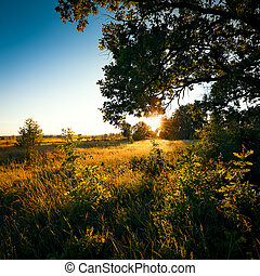 Dawn, the first rays of the sun break through the branches of a large oak tree growing in a field with various grasses.