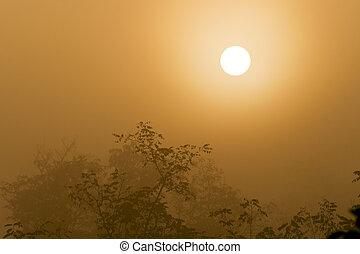 day., brumoso, levantamiento, bosque