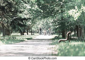 day., camino, verano, ciudad del parque