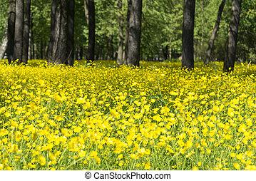 day., champ, fleurs, ensoleillé, jaune