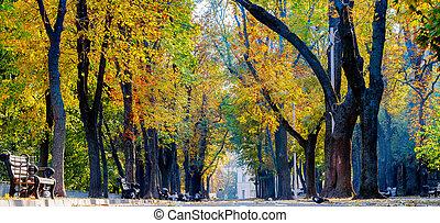 day., ensoleillé, automne, parc, coloré
