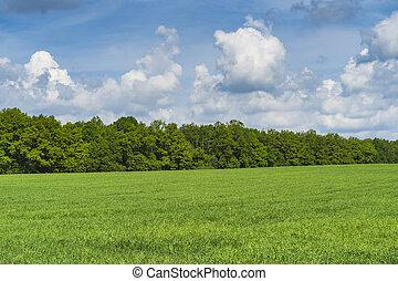 day., mező, zöld erdő, nyár, horizon.
