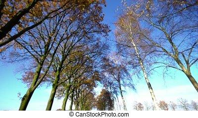 daylight., arbres, briller