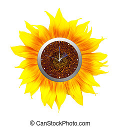 Daylight savings time, clocks forward into summer, summertime.