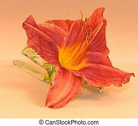 daylily, vase