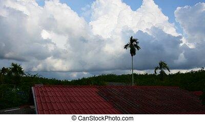 Daytime sky at rubber tree plantati