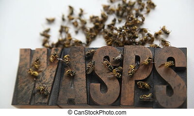 wasps - dazed and dead yellow jackets on and above the word...