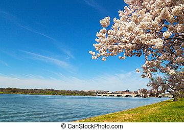 dc., 橋梁, 紀念館, 花, arlington, 首都, 華盛頓, river., 我們, 節日, 波托馬克河, 櫻桃, 河, 橫跨