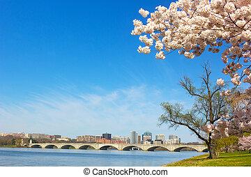 dc., 橋梁, 紀念館, rosslyn, 摩天樓, 花, arlington, 華盛頓, 春天, 波托馬克河, 櫻桃, 河, 看法