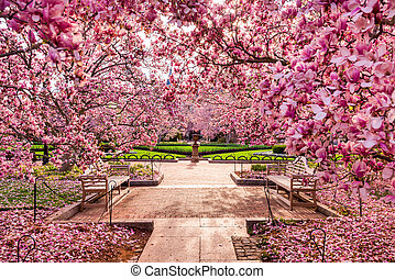 DC in Spring - Washington DC spring foliage near the...