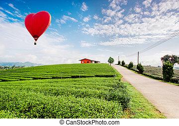 de aire caliente, globos, el volar encima, plantación de té, paisaje, en, sunrise.