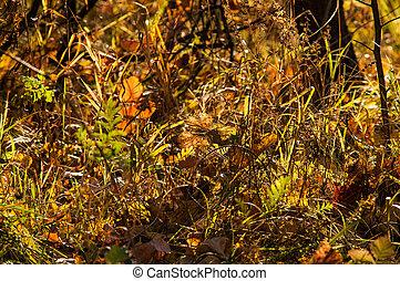 de, bladeren, in, de, herfst, magisch, bos