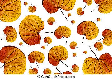 de bladeren van de esdoorn, achtergrond