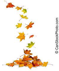de bladeren van de esdoorn, het vallen