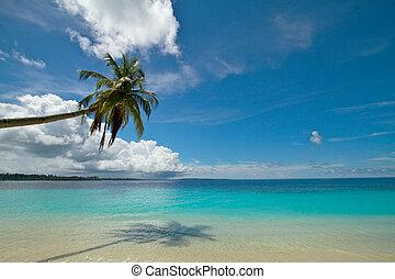 de boom van de kokospalm, op, perfect, tropisch strand