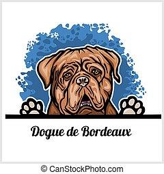 de, cane, bianco, bordeaux, dogue, testa, sfondo colore, ...