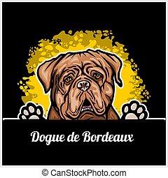 de, cane, bordeaux, dogue, testa, sfondo colore, razza, nero