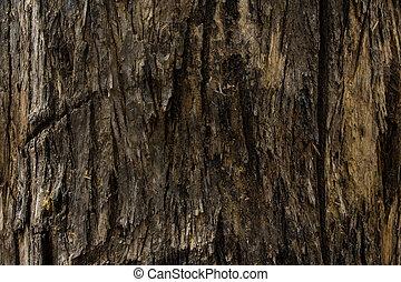 de, corteza, árbol
