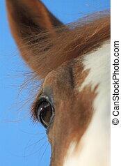de, denken, paarde
