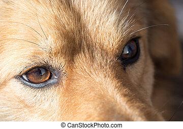 de, eyes, van, een, dog., macro