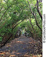 de, fiets, op, een, hout, steegjes, in, bos
