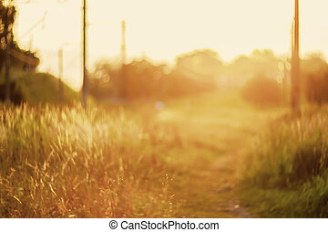 De focused path on sunset, natural bokeh background