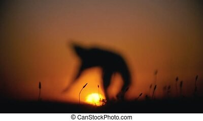 De-focused silhouette of male fighter performing capoeira tricks on the hill at sunset