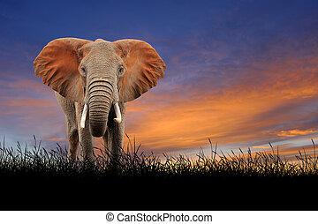de hemel van de zonsondergang, achtergrond, elefant