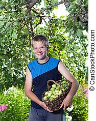 de, jongen, de, tiener, met, een, mand van de appels, in, een, tuin