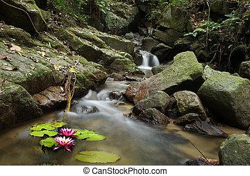 de, kleine, waterlelie, en, waterval, in, bos,