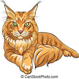 de kleur van de kat, vector, schets, pluizig, maine, coon