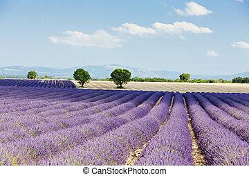 de, lavendel, frankreich, bergplateau, feld, provence, valensole