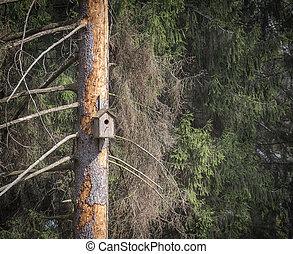de madera, árbol., birdhouse