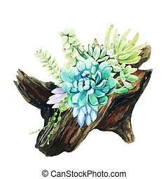 de madera, acuarela, brillante, succulents, nudo compuesto, crecer, olla