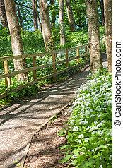 de madera, ambulante, trayectoria, en, un, parque verde, en, primavera