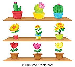 de madera, ornamental, plantas, estantes