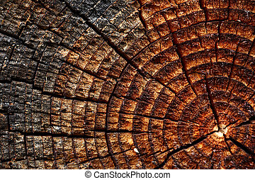de madera, plano de fondo, con, agrietado, anual, timbre de...