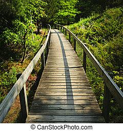 de madera, por, bosque, sendero