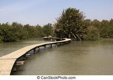 de madera, puentes