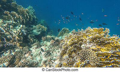 de, onderwater, wereld, van, de, rood, sea., marsa, alam