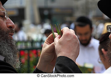 de, orthodoxe jood, chooses, ritueel, plant
