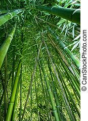 de par en par, bambú, ángulo