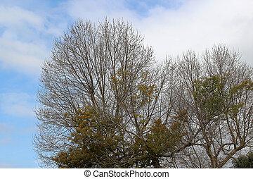 de, primavera, ramas, ?rboles, en