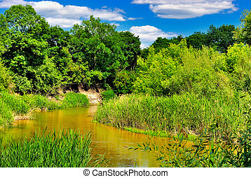 de, rivier, in, de, hout, op, een, zonnige dag