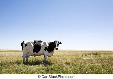 de ruimte van het exemplaar, koe
