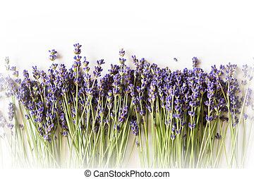 de ruimte van het exemplaar, lavendel, achtergrond, witte bloemen, roeien