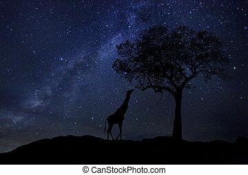 de slepen van de ster, melk, weg, in, zuid-afrika, avond...